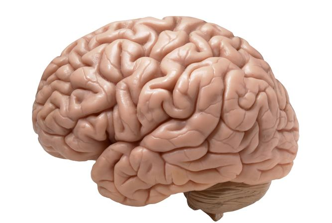 Multiple facts about brain